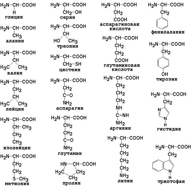 20-aminokislot